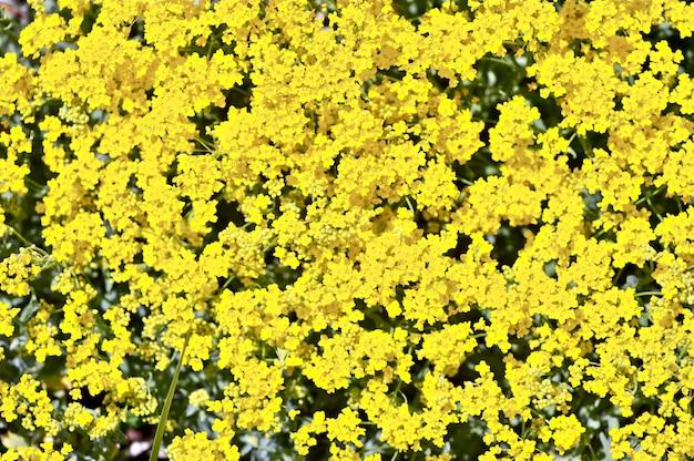 Gelber blühender hintergrund