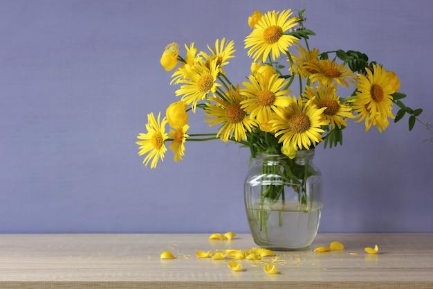 Gelber bröckelnder blumenstrauß auf einem purpurroten hintergrund. gartengänseblümchen in einem glas auf dem tisch.