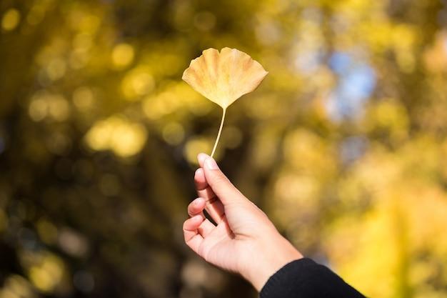 Gelber ginkgo verlässt an hand
