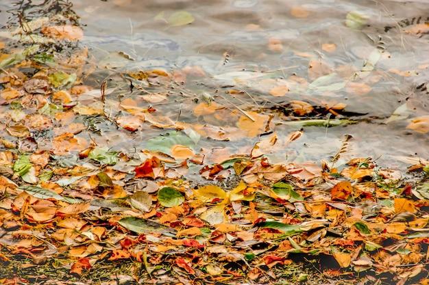 Gelber, grüner und roter baumherbstlaub, rahmenzusammensetzung auf wasserhintergrund.