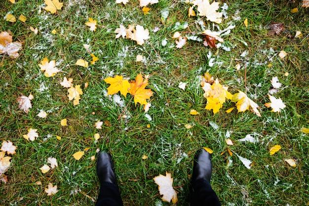 Gelber herbstlaub liegt auf dem grünen gras.