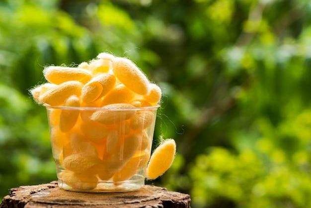Gelber kokon auf naturhintergrund. Premium Fotos