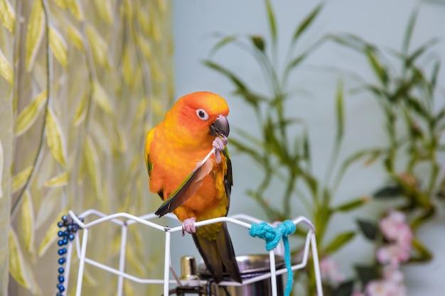 Gelber papagei hält eine feder