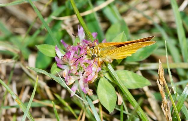 Gelber schmetterling, der auf dem gras stillsteht