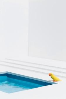 Gelber vogel neben dem schwimmbad