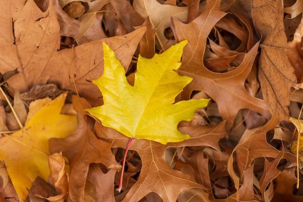 Gelbes ahornblatt auf trockenen blättern - ideal für eine natürliche tapete