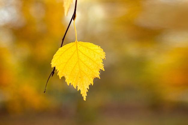 Gelbes birkenblatt auf einem unscharfen herbsthintergrund