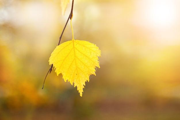 Gelbes birkenblatt im wald auf unscharfem hintergrund, herbsthintergrund