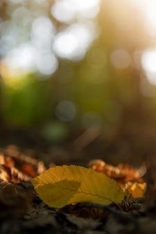 Gelbes blatt auf dem boden eines baumes, vor dem hintergrund anderer orangefarbener, gelber und grüner blätter und bäume im herbstlichen wald. herbsthintergrund. schönes künstlerisches licht bei sonnenuntergang.nahaufnahme