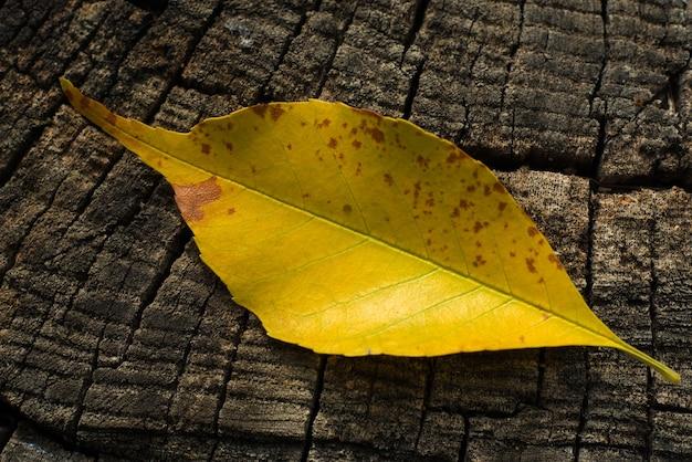 Gelbes blatt auf gefällter holzbeschaffenheitshintergrund-nahaufnahme