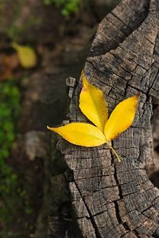 Gelbes blatt auf gefällter holzbeschaffenheitshintergrund