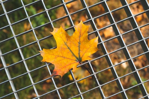 Gelbes blatt des herbstahorns auf einem grauen metallgitter.