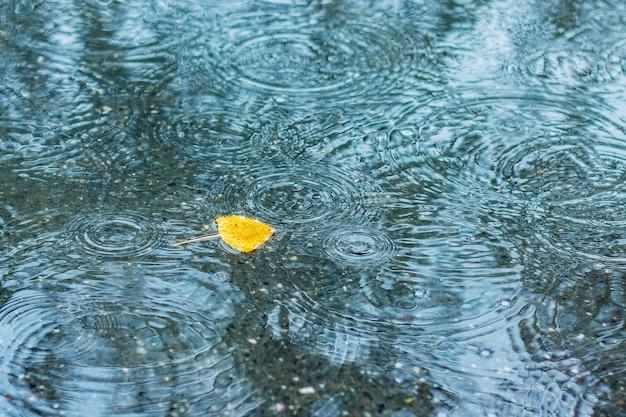 Gelbes blatt in der pfütze während des regens am herbsttag