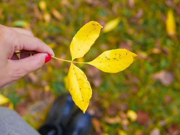 Gelbes blatt in einer hand. vor dem hintergrund der herbstnatur. herbstgelbes blatt in einer hand. mit verschwommenem bokeh-licht. der herbst ist gekommen. zeit des jahres
