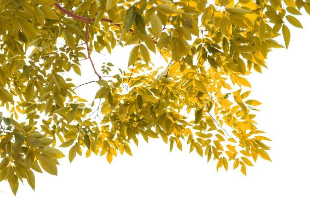 Gelbes blatt isoliert auf weißem hintergrund