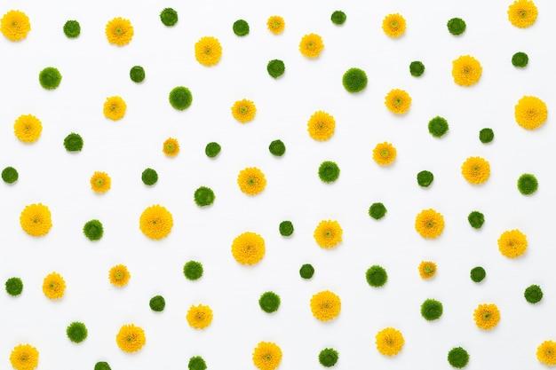 Gelbes blumenmuster auf weißem hintergrund. gerbera frühlingsblumen angeordnet auf einem lebendigen hintergrund. draufsicht.