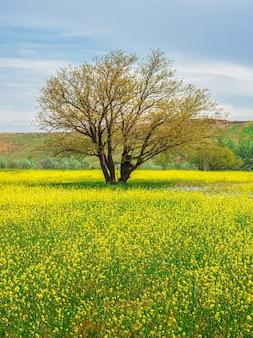 Gelbes feld von blühendem raps und baum vor blauem himmel. naturlandschaftshintergrund mit kopienraum. erstaunliche helle bunte frühlingslandschaft für tapeten. vertikale ansicht.