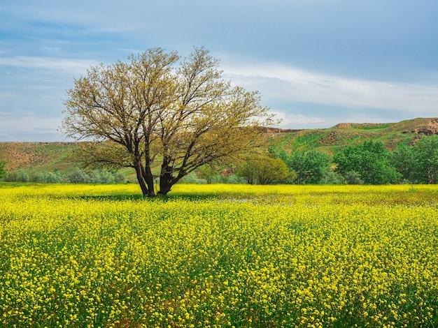 Gelbes feld von blühendem raps und baum vor blauem himmel. naturlandschaftshintergrund mit kopienraum. erstaunliche helle bunte frühlingslandschaft für tapeten.