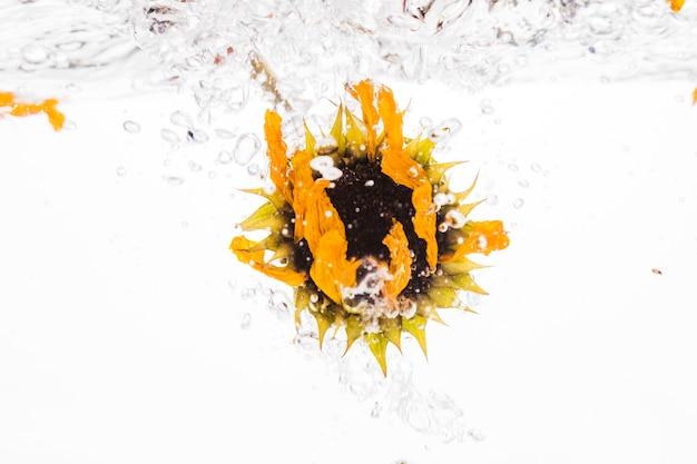 Gelbes gänseblümchen, das in wasser fällt
