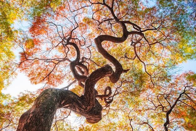 Gelbes ginkgobaumblatt im blauen himmel der herbstfall-jahreszeit
