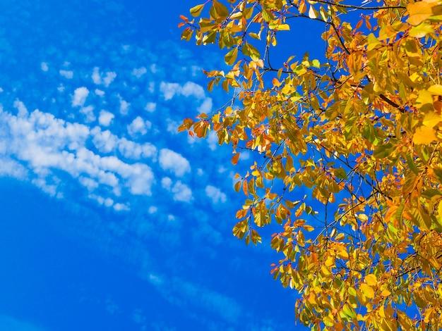 Gelbes laub gegen blauen himmel.