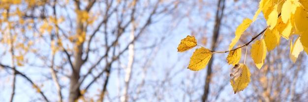 Gelbes laub im herbstpark. herbstlaub himmel.