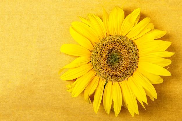 Gelbes tuch mit sonnenblume