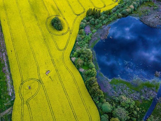 Gelbes vergewaltigungsfeld neben dem teich mit dramatischer wolkenreflexion darin