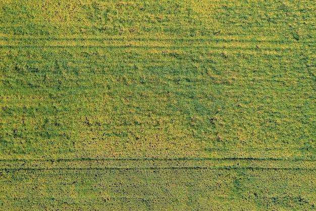 Gelbgrünes gras als hintergrund aus der höhe, drohne