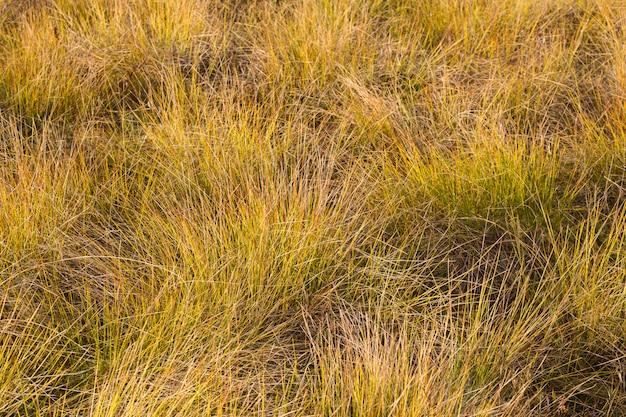 Gelbgrünes gras mit sonnenlicht im herbst