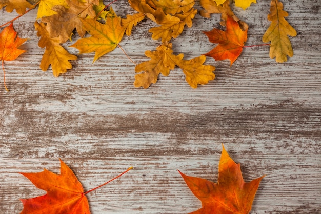 Gelbroter eichenahorn herbstblätter. auf holzoberfläche. textur