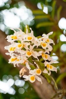 Gelbweiße orchideen