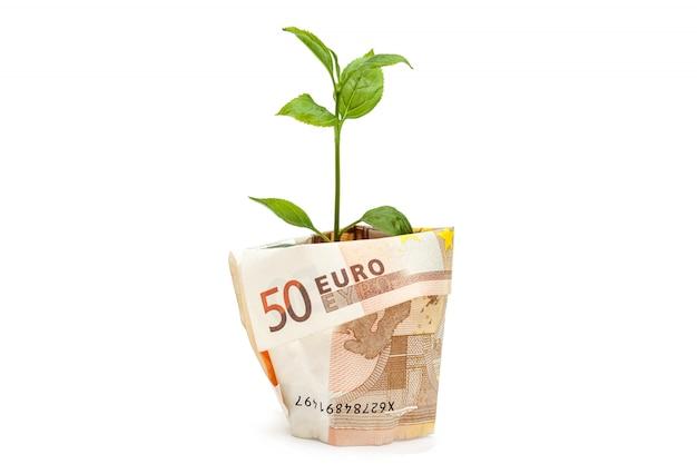 Geld wachsen