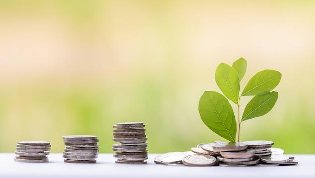 Geldbaum mit münze für das wachstum ihres geschäfts