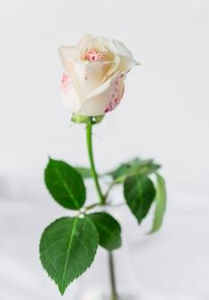 Gemalte weiße rose, die auf tabelle steht