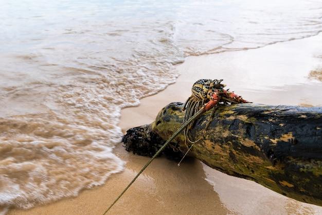Gemalter languste auf bauholz auf dem strand