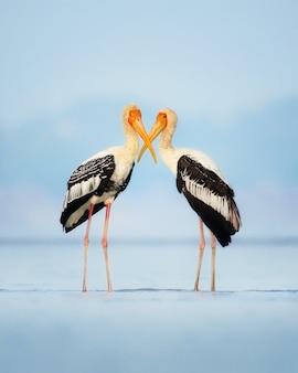 Gemaltes storchenpaar