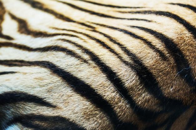 Gemasert aus echtem weißen bengal tigerfell
