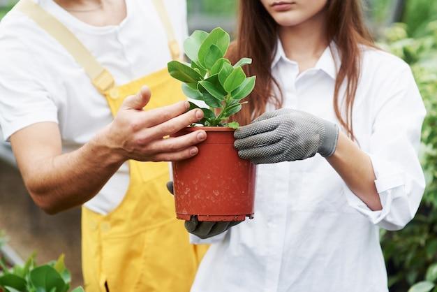 Gemeinsam können sie beste ergebnisse erzielen. ein paar nette gartenarbeiter in arbeitskleidung, die sich um die pflanze im topf im gewächshaus kümmern.