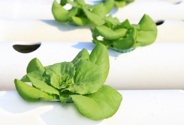 Gemüse-hydrokultur-bauernhof