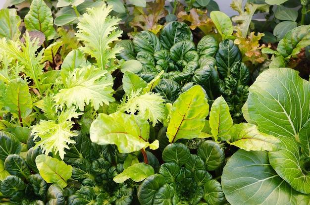 Gemüse wächst in einem gemüsegarten