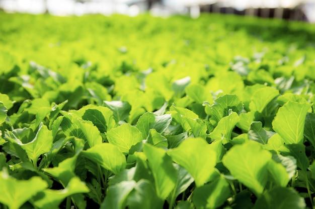 Gemüse wächst mit sonnenlicht.