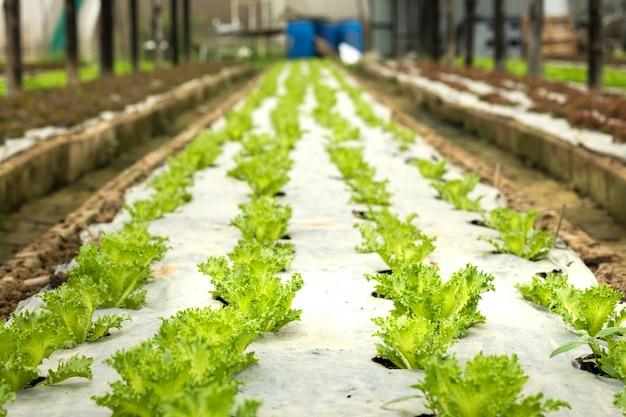 Gemüsebauernhof drinnen gemüse für salat