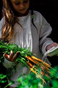 Gemüseernte in den händen eines kleinen mädchens