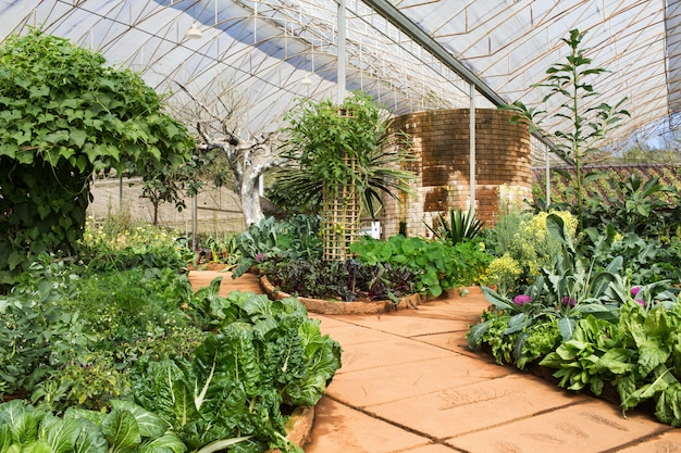 Gemüsegarten in einem grünen haus