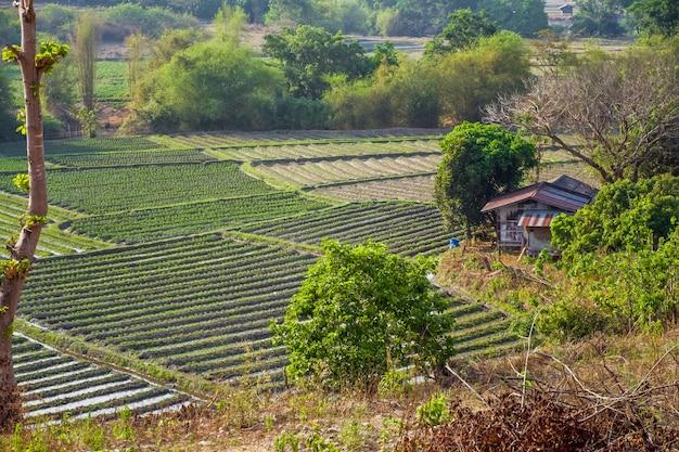 Gemüsegartenterrassen mit häuschen auf berg bei omkoi, chiang mai, thailand.