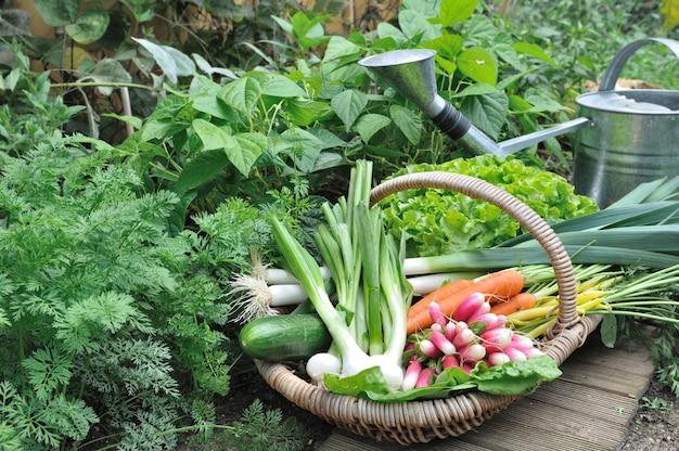 Gemüsekorb im garten