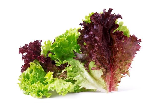 Gemüsesalat kopfsalat lollo rosso isoliert auf weißem hintergrund. blatt aus gekräuseltem veilchensalat