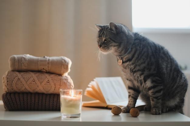 Gemütliche wohnatmosphäre mit einem lustigen katzenkerzenbuch und pullover