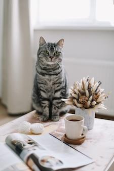 Gemütliches foto einer lustigen katze zu hause